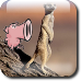 Suricata-vs-snort-icon.png