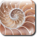 Shell-icon.png